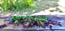 Basil Flowers, Parsley On A Wooden Table, With A Visible Edge. Against The Backdrop Of A Green Sunny Garden.