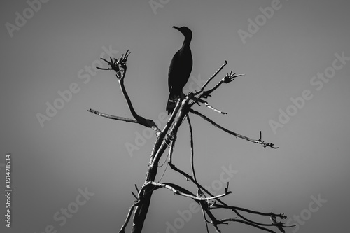 Grayscale shot of a heron perched on a bare tree Wallpaper Mural