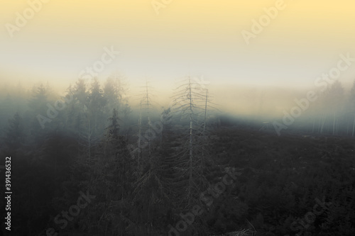 Beautiful view of the mystic, creepy and foggy forest - great for wallpapers Fototapet