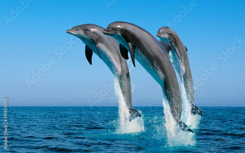 Fotografia dolphin jumping in the water