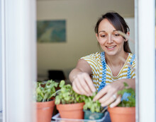 Woman Picking Home-grown Herbs On Windowsill