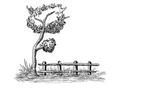 Illustration Of Lonely Tree And A Farm Old Wooden Fence