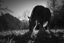 Black And White Photo Of Horse...