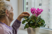 An Elderly Woman Cares For A Home Flower In A Pot On A Windowsill Near The Window