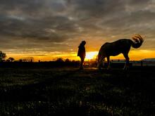 Cheval Equitation Soleil Soir ...