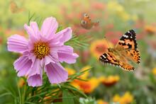 Schmetterling 707