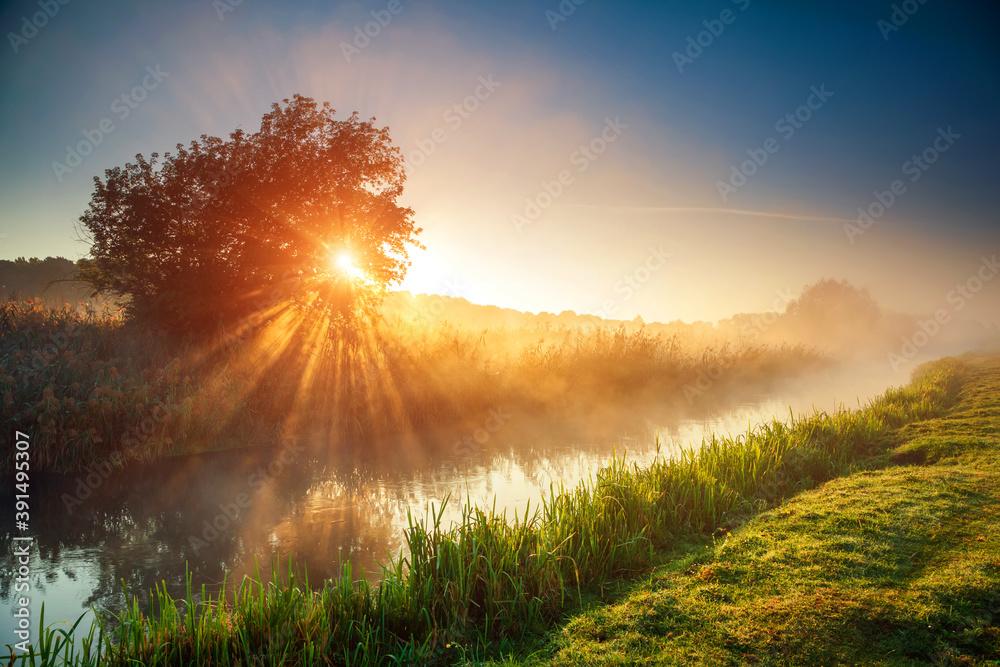 Fototapeta Fantastic foggy river with fresh green grass in the sunlight.