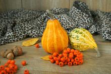 Composition Of Natural Small Decorative Pumpkins. Autumn Still Life