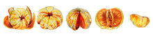 Set Of Whole Tangerines And Slices Isolated On A White Background.Horizontal Border.Botanical Watercolor Illustration Of The Fruits Of Mandarin Orange Without A Peel.Christmas Plants.New Year's Fruit.