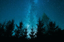 Low Angle Shot Of A Beautiful Blue Starry Sky Over Trees