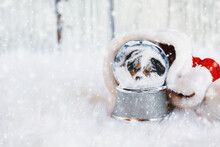Snow Globe With Image Of A Sleeping Australian Shepherd Puppy Inside Surrounded By Santa Hat With Falling Snow. Shallow Depth Of Field With Selective Focus On Snowglobe And Copy Space Available.