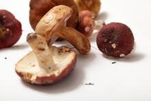 Group Of Mushrooms Russula On ...