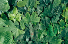 Different Green Leafs Background