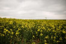 Wild Flower Field In France