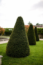 Cone Shaped Hedges In Garden I...