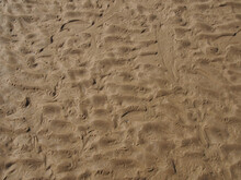 Wet Rippled Sand On A Beach At Low Tide With The Imprints Of Bird Tracks Forming A Pattern On The Surface
