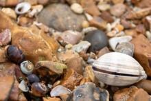 Sea Shells On A  Stony Beach