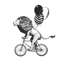 Lion Rides Bicycle With Balloons Vector Illustration. Vintage Mascot Cute Lion Cycle Bike Isolated On White. Happy Birthday Animal Character Black And White Sketch. Flat Outline Grunge Drawing
