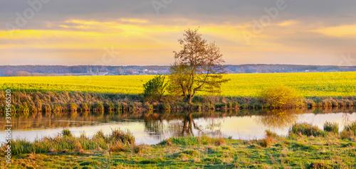 Spring landscape with river and yellow rapeseed field during sunset Billede på lærred