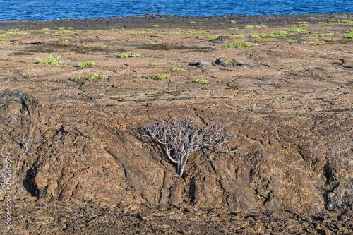 Genovesa Island arid landscape, Galapagos, Ecuador Fototapete