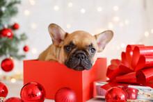 Christmas Dog With Gift Box, F...