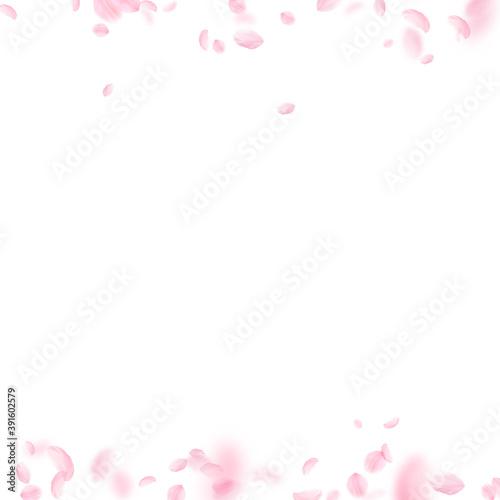 Sakura petals falling down. Romantic pink flowers  © Begin Again