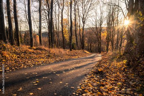 Fotografía golden light in autumn forest, sunset with beautiful evening light, fallen leave