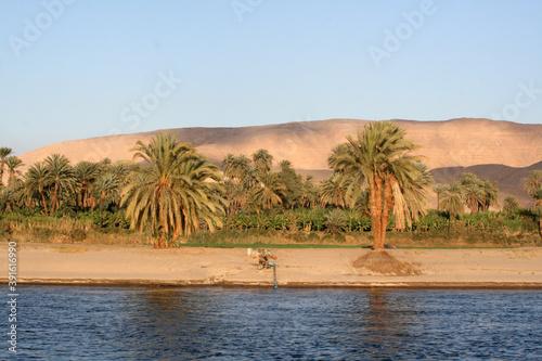 Foto oasis in the desert