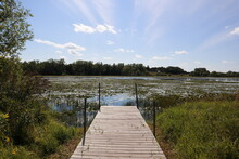 Dock On Marshy Pond In Daylight