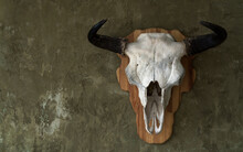 Bull Skull Hanged On Wall With...