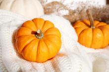 Bright Orange Pumpkin Composition On White Knitted Blanket. Thanksgiving Greeting Card. Autumn Wallpaper. Fall Background. Autumn Recipe Book. Autumn Seasonal Menu Banner. Thanksgiving Day Wallpaper