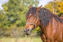 Koń W Blasku Słońca
