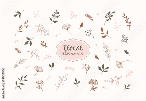 Set of vector plants and herbs. Hand drawn floral elements.