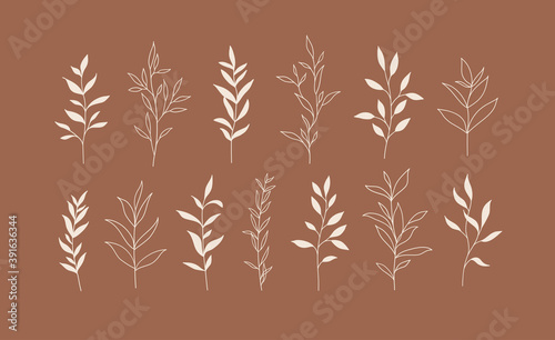 Photo Set of vector plants and herbs. Hand drawn floral elements.