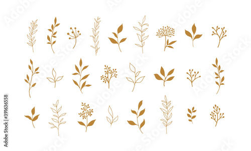 Fotografija Set of vector plants and herbs. Hand drawn floral elements.