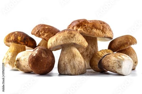 Papel de parede Group boletus mushroom isolated on white background