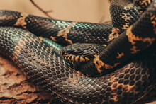 Closeup Of A Snake Tangled In ...
