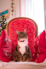 Vertical Closeup Of A Cat Sitting On A Chair With Red Cushions