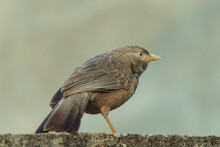 A Bird Resting On A Wall