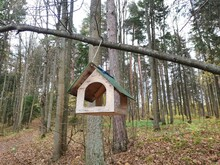 Hand-made Bird Feeder In The Forest. Caring For Wild Birds