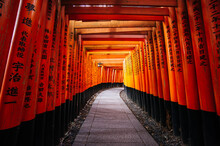 Thousands Of Red Torii Gates A...