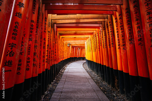 Fotografia, Obraz Thousands of red torii gates at Fushimi Inari Taisha Shrine in Kyoto, Japan