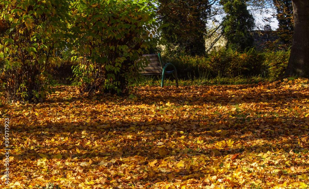 Fototapeta jesienny spacer, liść opadł