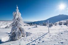 Winter Landscape In Giant Moun...