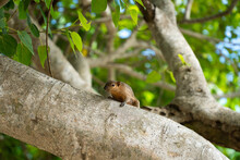 Little Cute Squirrel Sits On A Tree On The Beach Of Bali