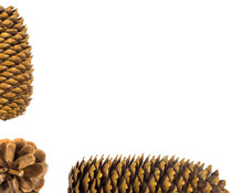 An Pine Cone At Corner And Two Fir Cones With A Copy Space Isolated On White Background.