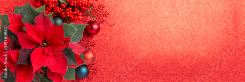 Obraz Red poinsettia flower and festive Christmas arrangement on red background. Top view, copy space. Xmas banner. - fototapety do salonu