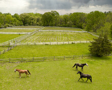 Aerial Of Horses Playing With ...