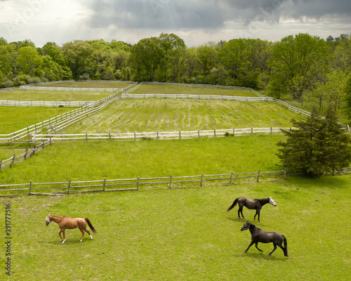 Aerial of horses playing with fly masks on their heads.