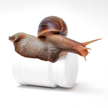 Large Snail On A White Jar Or ...